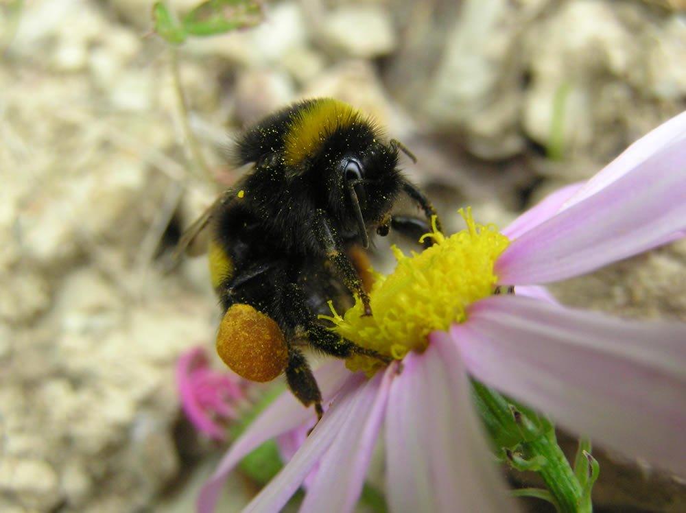 - Bee Gallery
