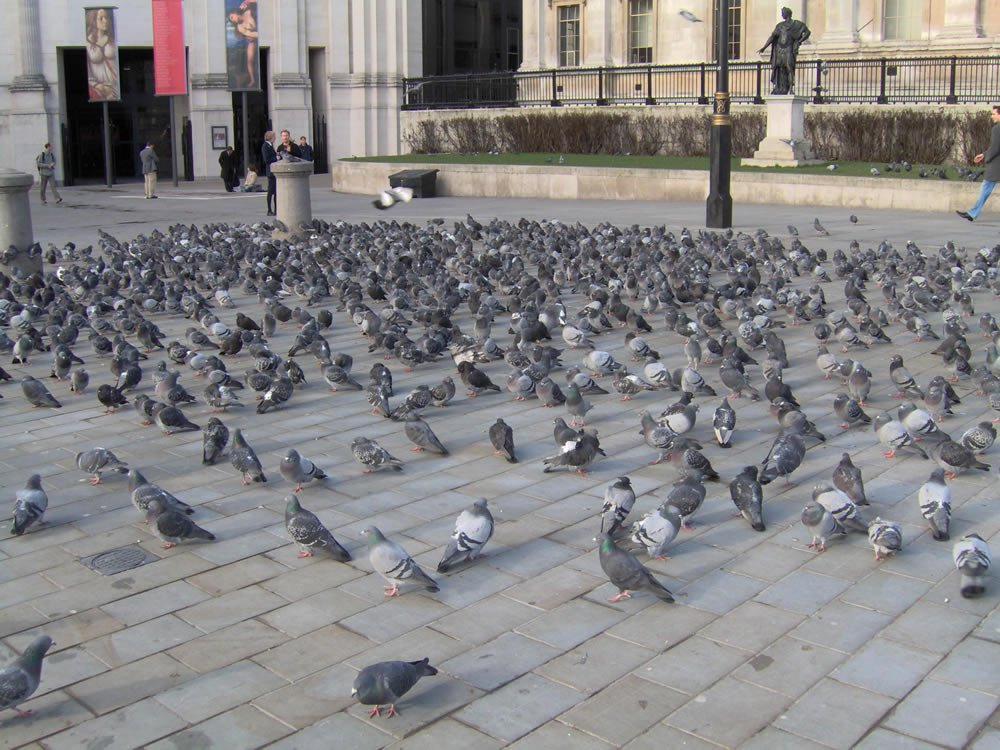 poisoning pigeons in the park pdf