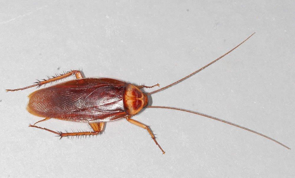 Carpet Beetle Treatment West Midlands Carpet Beetle