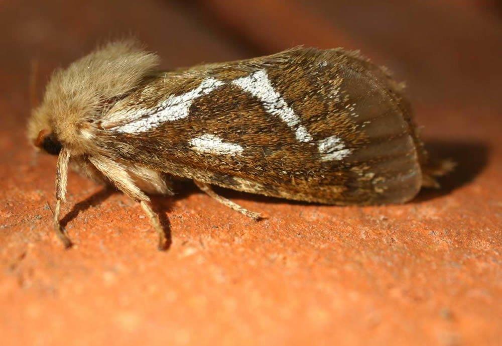 Fly Control West Midlands Bedbug Treatment Control