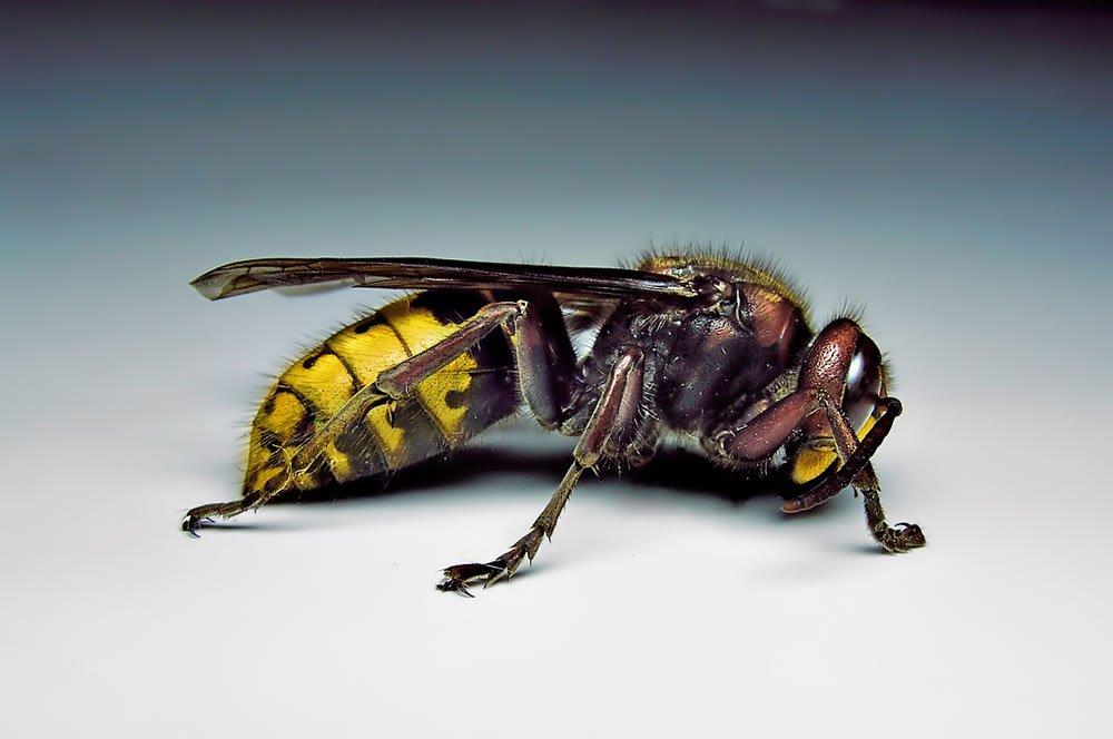 - Hornets Gallery
