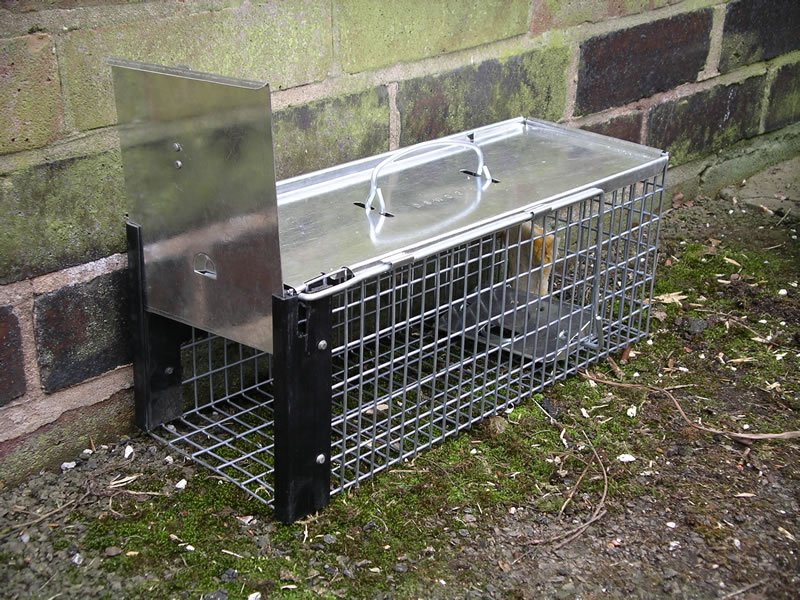 A humane rat trap - Rats Gallery
