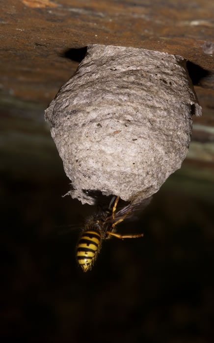 - Wasps Nest Removal gallery