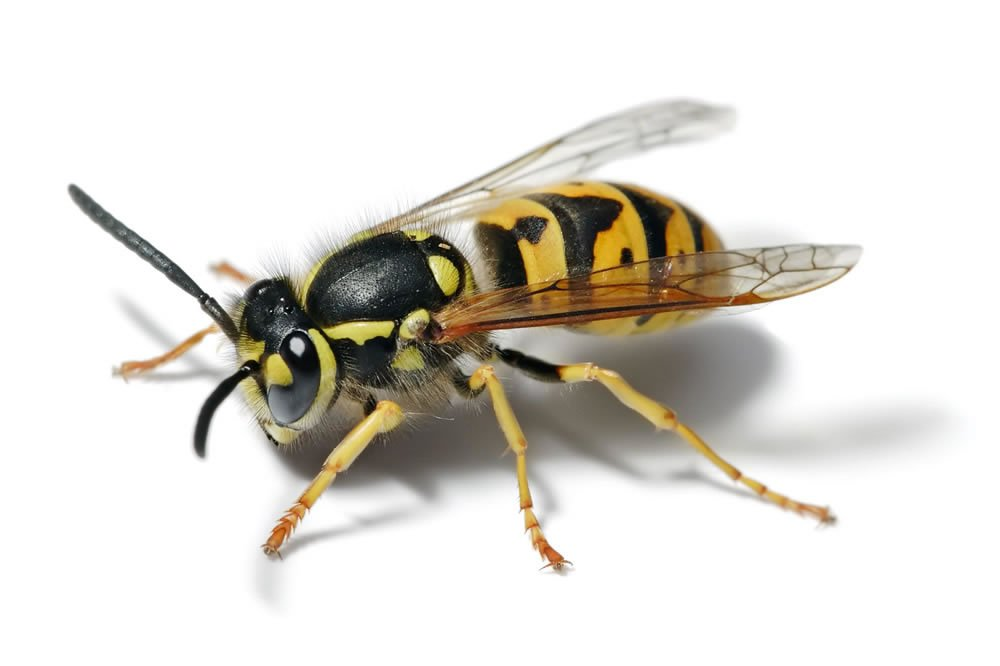 - Wasp Gallery