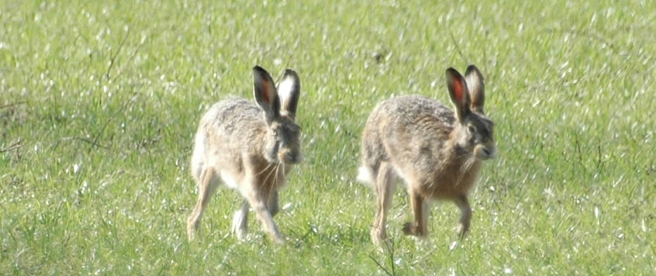 Rabbit & Hare Control